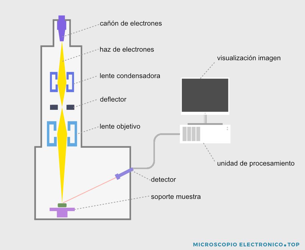 partes-microscopio-electronico-barrido