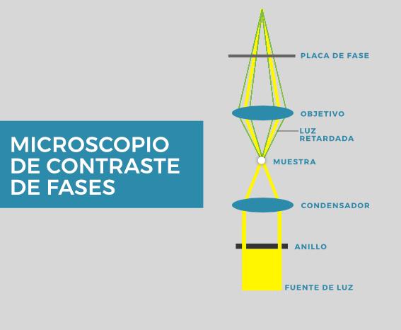 Microscopio de contraste de fases