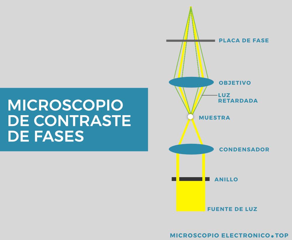 microscopio-contraste-fases