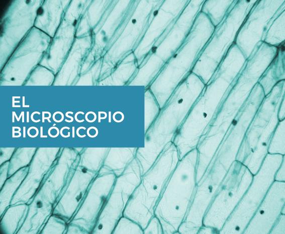 microscopio-biologico-thumb