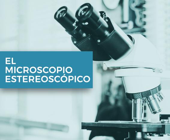 Microscopio estereoscópico
